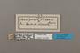 124504 Antigonis pharsalia felderi labels IN