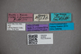 2819834 Dianous freyi HT labels IN