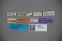 2819840 Dianous punctiventris ST labels IN