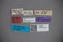 2819841 Stenus hygrobius ST labels2 IN
