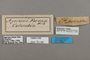 124566 Hamadryas fornax fornacalia labels IN