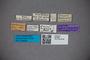 2819849 Dianous szechuanus ST labels IN