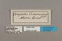 124608 Callicore astarte codomannus labels IN