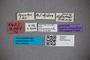 2819857 Stenus adnexus ST labels2 IN