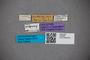 2819860 Stenus aethiopicus HT labels IN