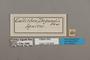 124644 Asterope degandii labels IN
