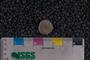 IMLS Silurian Reef Digitization Project, Image of a Silurian brachiopod UC 5740