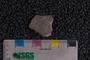 IMLS Silurian Reef Digitization Project, Image of a Silurian brachiopod UC 5838