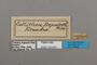 124650 Asterope leprieuri depuiseti labels IN