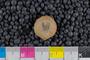 IMLS Silurian Reef Digitization Project, Image of a Silurian brachiopod UC 3128