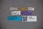 2819864 Stenus alticola Bernhauer HT labels IN