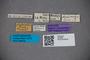 2819869 Stenus alutiventris ST labels IN