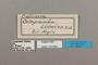 124664 Diaethria eluina lidwina labels IN