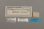124676 Diaethria candrena candrena labels IN
