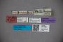 3047600 Stenus amplificatus ST labels2 IN