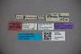 3047600 Stenus amplificatus ST labels IN