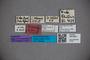3047603 Stenus anellus ST labels IN