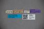 3047604 Stenus angulipennis ST labels IN