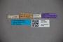3047606 Stenus angustiventris ST labels IN