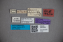 3047608 Stenus antillensis ST labels2 IN