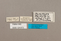 124673 Ahlbergia circe montivaga PT labels IN