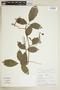 Paullinia elegans subsp. neglecta (Radlk.) D. R. Simpson, PERU, F