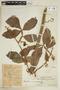 Paullinia macrophylla Cambess., COLOMBIA, F