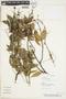 Paullinia pinnata L., PARAGUAY, F