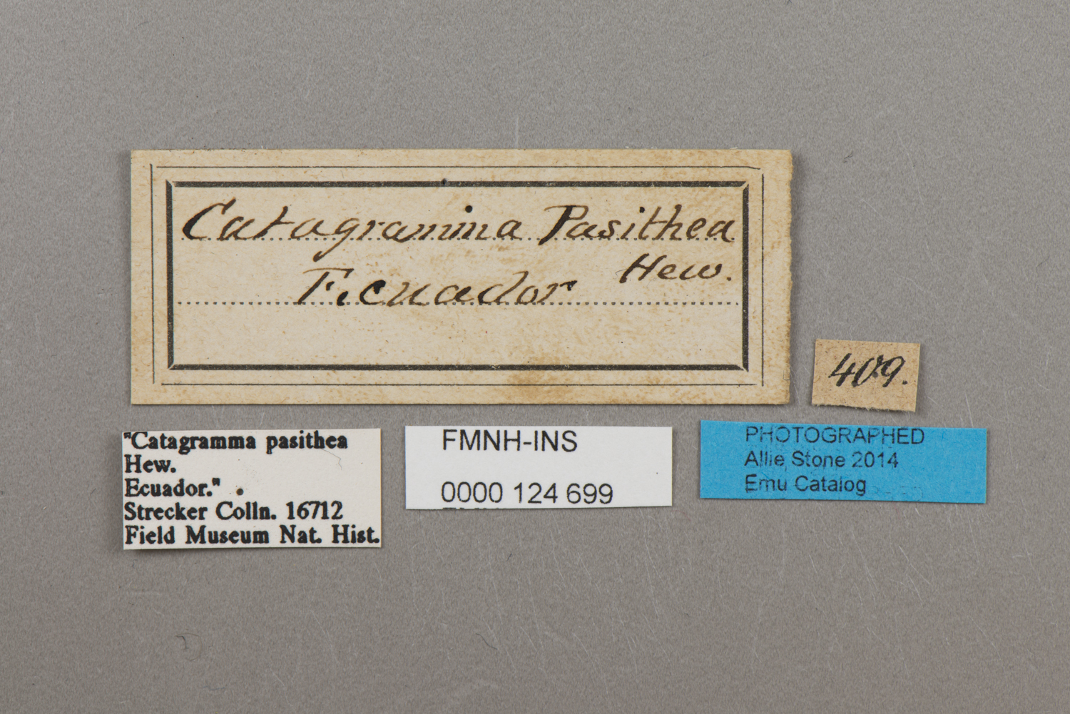 124699 Catacore Kolyma Pasithea Labels IN