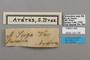 124706 Adelpha serpa labels IN