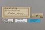 124716 Adelpha sp labels IN
