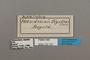 124722 Adelpha olynthia labels IN