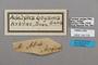 124725 Adelpha malea goyama labels IN
