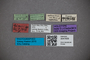 3047609 Stenus apertus HT labels2 IN