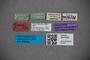 3047609 Stenus apertus HT labels IN