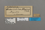 124730 Adelpha malea labels IN