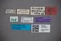 3047616 Stenus areolatus ST labels2 IN