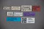 3047616 Stenus areolatus ST labels IN