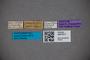 3047617 Stenus argentifer ST labels IN