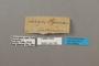124735 Adelpha syma labels IN
