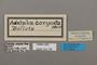 124736 Adelpha coryneta labels IN