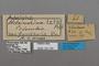124740 Adelpha malea fundania labels IN