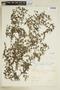 Relbunium hypocarpium image
