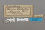 124763 Cymothoe jodutta labels IN