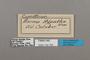 124765 Cymothoe hypatha labels IN