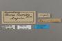 124766 Cymothoe lurida labels IN