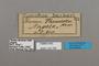 124768 Cymothoe beckeri labels IN