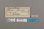 124771 Cymothoe egesta labels IN