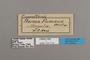 124774 Cymothoe fumana labels IN