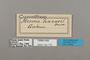 124775 Cymothoe lucasii labels IN